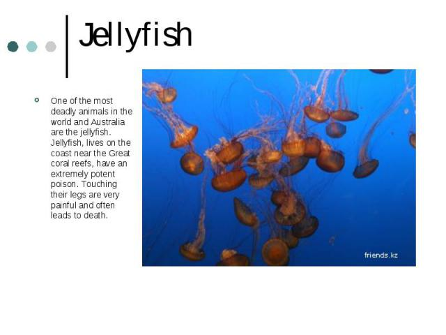 Jellyfish One of the most deadly animals in the world and Australia are the jellyfish. Jellyfish, lives on the coast near the Great coral reefs, have an extremely potent poison. Touching their legs are very painful and often leads to death.
