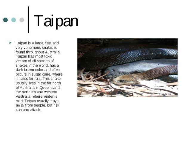 Taipan Taipan is a large, fast and very venomous snake, is found throughout Australia. Taipan has most toxic venom of all species of snakes in the world, has a dark brown color and often occurs in sugar cane, where it hunts for rats. This snake usua…
