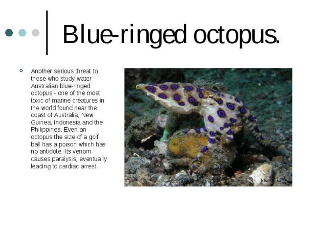 Blue-ringed octopus. Another serious threat to those who study water Australian blue-ringed octopus - one of the most toxic of marine creatures in the world found near the coast of Australia, New Guinea, Indonesia and the Philippines. Even an octopu…