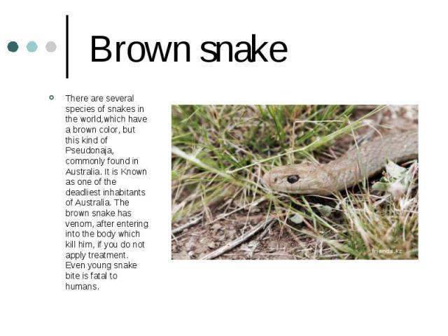 Brown snake There are several species of snakes in the world,which have a brown color, but this kind of Pseudonaja, commonly found in Australia. It is Known as one of the deadliest inhabitants of Australia. The brown snake has venom, after entering …