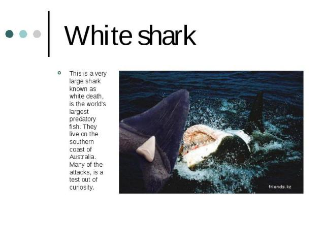 White shark This is a very large shark known as white death, is the world's largest predatory fish. They live on the southern coast of Australia. Many of the attacks, is a test out of curiosity.