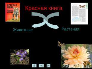 Красная книга ЖивотныеРастения