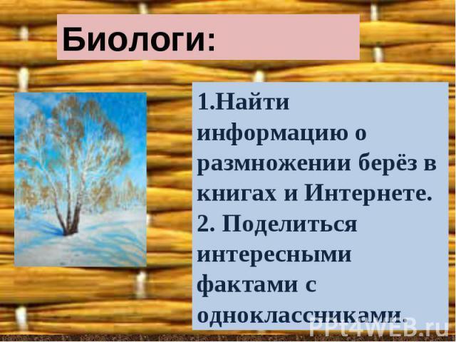 Биологи:1.Найти информацию о размножении берёз в книгах и Интернете.2. Поделиться интересными фактами с одноклассниками.