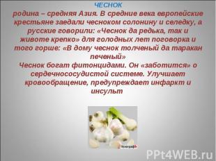 ЧЕСНОКродина – средняя Азия. В средние века европейские крестьяне заедали чеснок