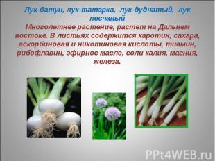 Лук-батун, лук-татарка, лук-дудчатый, лук песчаныйМноголетнее растение, растет н