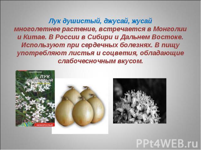 Лук душистый, джусай, жусаймноголетнее растение, встречается в Монголии и Китае. В России в Сибири и Дальнем Востоке. Используют при сердечных болезнях. В пищу употребляют листья и соцветия, обладающие слабочесночным вкусом.