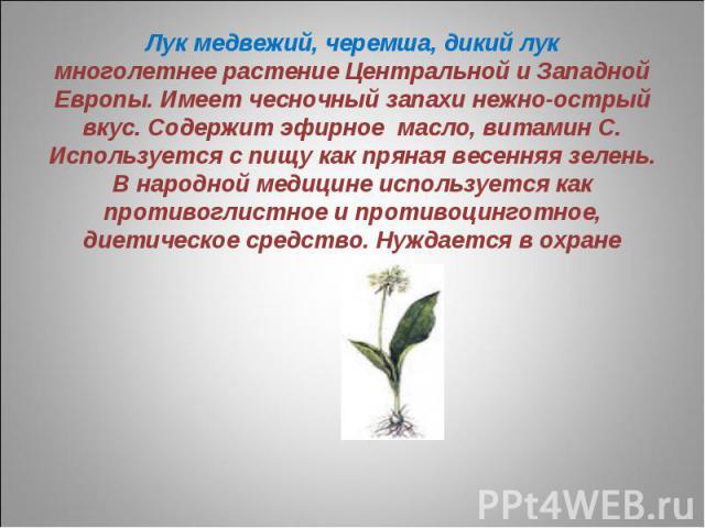 Лук медвежий, черемша, дикий лукмноголетнее растение Центральной и Западной Европы. Имеет чесночный запахи нежно-острый вкус. Содержит эфирное масло, витамин С. Используется с пищу как пряная весенняя зелень. В народной медицине используется как про…