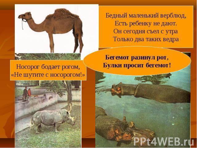Бедный маленький верблюд,Есть ребенку не дают.Он сегодня съел с утраТолько два таких ведраНосорог бодает рогом,«Не шутите с носорогом!»Бегемот разинул рот,Булки просит бегемот!