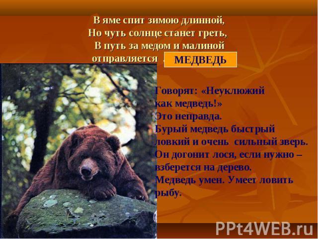 В яме спит зимою длинной,Но чуть солнце станет греть, В путь за медом и малинойотправляется ……………… Говорят: «Неуклюжий как медведь!»Это неправда.Бурый медведь быстрыйловкий и очень сильный зверь.Он догонит лося, если нужно – взберется на дерево.Медв…