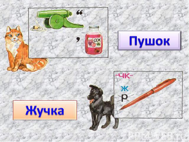 ПушокЖучка