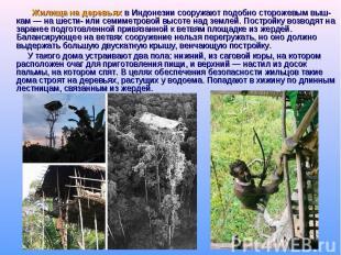 Жилища на деревьях в Индонезии сооружают подобно сторожевым выш-кам — на шести-