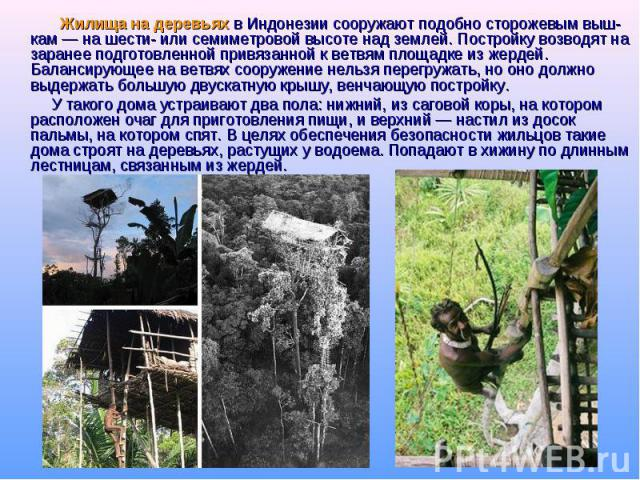 Жилища на деревьях в Индонезии сооружают подобно сторожевым выш-кам — на шести- или семиметровой высоте над землей. Постройку возводят на заранее подготовленной привязанной к ветвям площадке из жердей. Балансирующее на ветвях сооружение нельзя перег…