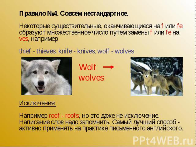 Правило №4. Совсем нестандартное.Некоторые существительные, оканчивающиеся на f или fe образуют множественное число путем замены f или fe на ves, напримерthief - thieves, knife - knives, wolf - wolves Исключения:Например roof - roofs, но это даже не…