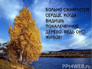 Больно сжимается сердце, когда видишь покалеченное дерево. Ведь оно живое!