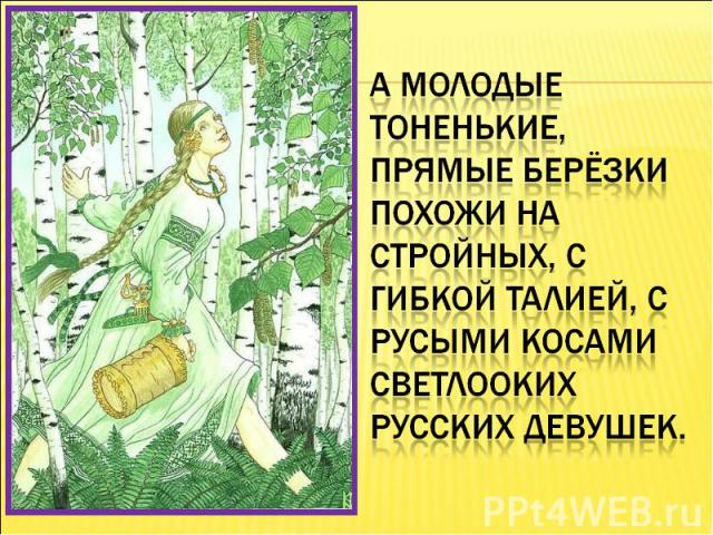 А молодые тоненькие, прямые берёзки похожи на стройных, с гибкой талией, с русыми косами светлооких русских девушек.
