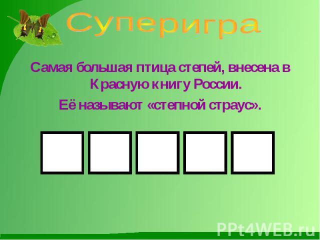 Суперигра Самая большая птица степей, внесена в Красную книгу России.Её называют «степной страус».