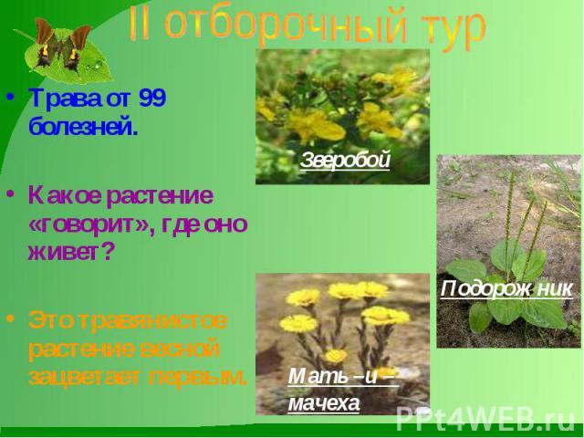 II отборочный тур Трава от 99 болезней. Какое растение «говорит», где оно живет? Это травянистое растение весной зацветает первым.
