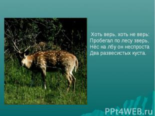 Хоть верь, хоть не верь:Пробегал по лесу зверь,Нёс на лбу он неспростаДва развес