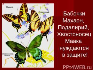 БабочкиМахаон, Подалирий, ХвостоносецМаака нуждаются в защите!