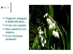 Родился ландыш в майский день,И лес его хранит,Мне кажется: его задень,И он тихо