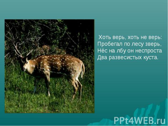 Хоть верь, хоть не верь:Пробегал по лесу зверь,Нёс на лбу он неспростаДва развесистых куста.