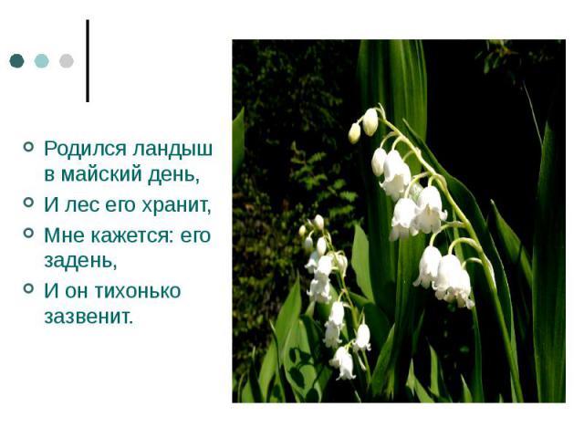 Родился ландыш в майский день,И лес его хранит,Мне кажется: его задень,И он тихонько зазвенит.