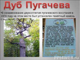 Дуб ПугачеваВ ознаменование двухсотлетия пугачевского восстания в 1974 году на э