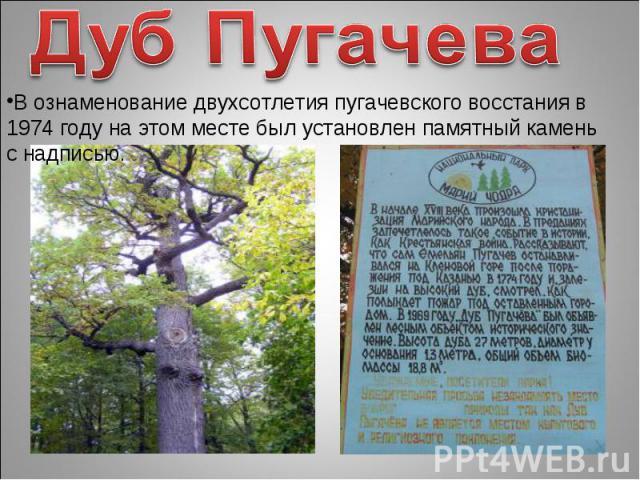Дуб ПугачеваВ ознаменование двухсотлетия пугачевского восстания в 1974 году на этом месте был установлен памятный камень с надписью.