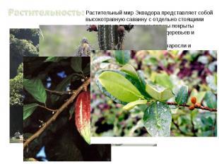 Растительность:Растительный мир Эквадора представляет собой высокотравную саванн