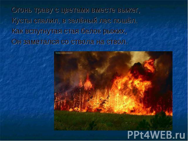 Огонь траву с цветами вместе выжег,Кусты спалил, в зелёный лес пошёл.Как вспугнутая стая белок рыжих,Он заметался со ствола на ствол.