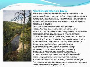 Разнообразие флоры и фауныУникален и относительно богат растительный мир заповед