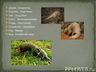 Домен: ЭукариотыЦарство : ЖивотныеТип : ХордовыеКласс : МлекопитающиеОтряд : Пан