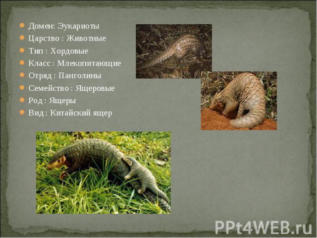 Домен: ЭукариотыЦарство : ЖивотныеТип : ХордовыеКласс : МлекопитающиеОтряд : ПанголиныСемейство : ЯщеровыеРод : ЯщерыВид : Китайский ящер