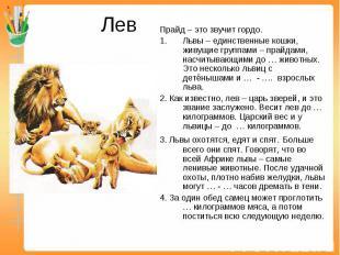 Лев Прайд – это звучит гордо.Львы – единственные кошки, живущие группами – прайд