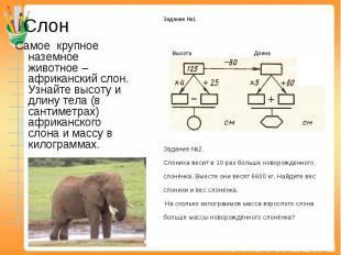 Слон Самое крупное наземное животное – африканский слон. Узнайте высоту и длину