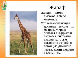 Жираф Жираф – самое высокое в мире животное. Это млекопитающее достигает высоты