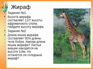 Жираф Задание №1. Высота жирафа составляет 11/7 высоты африканского слона. Найди