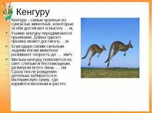Кенгуру Кенгуру - самые крупные из сумчатых животных, некоторые особи достигают