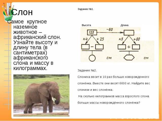Слон Самое крупное наземное животное – африканский слон. Узнайте высоту и длину тела (в сантиметрах) африканского слона и массу в килограммах.Задание №2. Слониха весит в 10 раз больше новорожденного слонёнка. Вместе они весят 6600 кг. Найдите вес сл…
