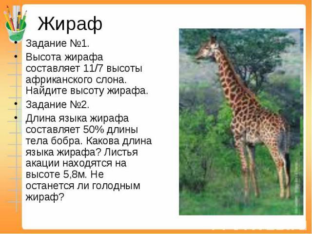 Жираф Задание №1. Высота жирафа составляет 11/7 высоты африканского слона. Найдите высоту жирафа.Задание №2. Длина языка жирафа составляет 50% длины тела бобра. Какова длина языка жирафа? Листья акации находятся на высоте 5,8м. Не останется ли голод…