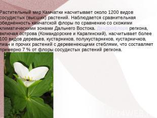Растительный мир Камчатки насчитывает около 1200 видов сосудистых (высших) расте