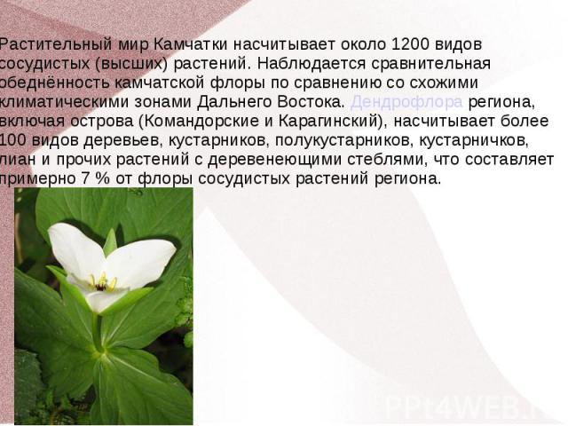 Растительный мир Камчатки насчитывает около 1200 видов сосудистых (высших) растений. Наблюдается сравнительная обеднённость камчатской флоры по сравнению со схожими климатическими зонами Дальнего Востока. Дендрофлора региона, включая острова (Команд…
