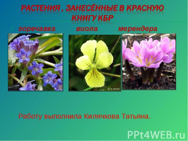 Растения , занесённые в Красную книгу КБР Работу выполнила Килячкова Татьяна.