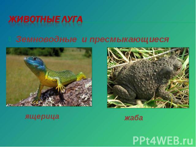 Животные луга Земноводные и пресмыкающиеся