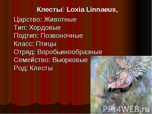 Клесты Loxia Linnaeus, Царство: ЖивотныеТип: ХордовыеПодтип: ПозвоночныеКласс: ПтицыОтряд: ВоробьинообразныеСемейство: ВьюрковыеРод: Клесты