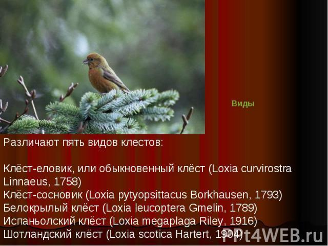 Различают пять видов клестов:Клёст-еловик, или обыкновенный клёст (Loxia curvirostra Linnaeus, 1758)Клёст-сосновик (Loxia pytyopsittacus Borkhausen, 1793)Белокрылый клёст (Loxia leucoptera Gmelin, 1789)Испаньолский клёст (Loxia megaplaga Riley, 1916…