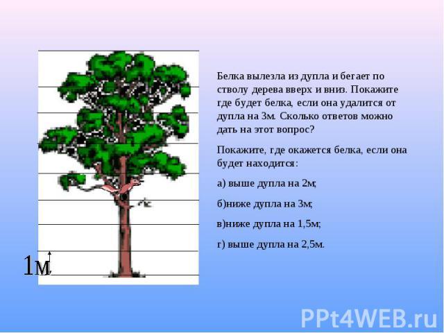 Белка вылезла из дупла и бегает по стволу дерева вверх и вниз. Покажите где будет белка, если она удалится от дупла на 3м. Сколько ответов можно дать на этот вопрос?Покажите, где окажется белка, если она будет находится:а) выше дупла на 2м;б)ниже ду…