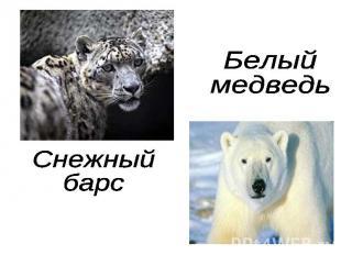 Белый медведьСнежный барс