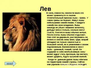 Лев В силе, ловкости, смелости мало кто может сравниться со львом. Отличительный
