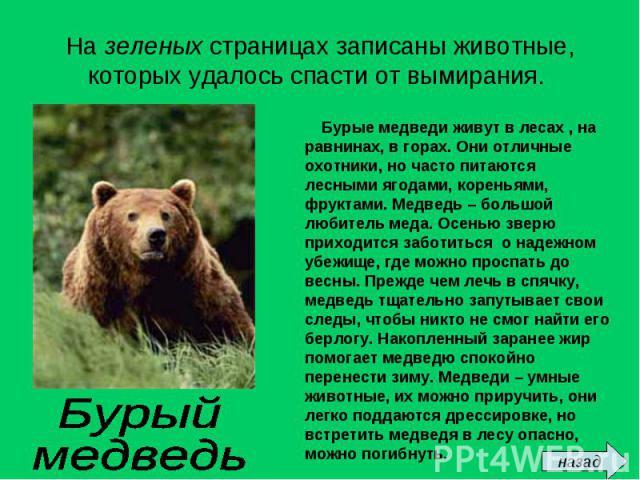 На зеленых страницах записаны животные, которых удалось спасти от вымирания. Бурые медведи живут в лесах , на равнинах, в горах. Они отличные охотники, но часто питаются лесными ягодами, кореньями, фруктами. Медведь – большой любитель меда. Осенью з…